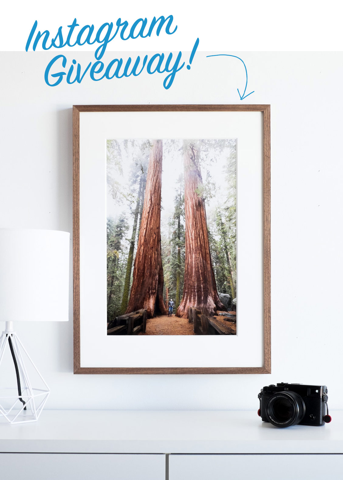 Giant sequoia framed photograph
